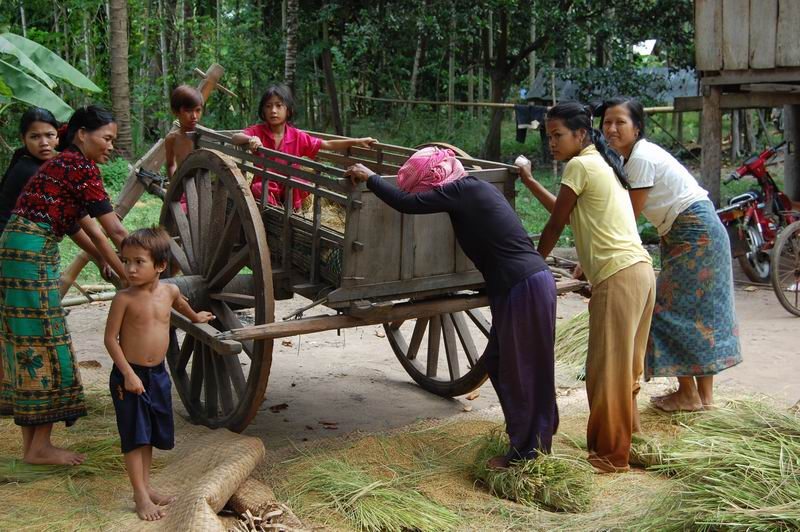 Women thrashing rice by foot in Kampong Cham province.