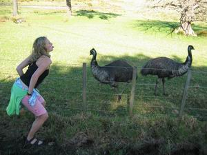 Take that giant birds!  emu