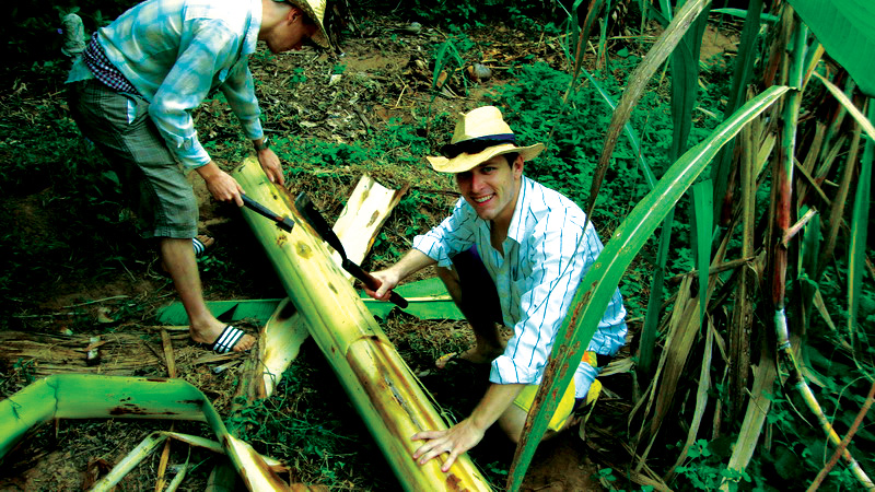 Cutting down banana trees