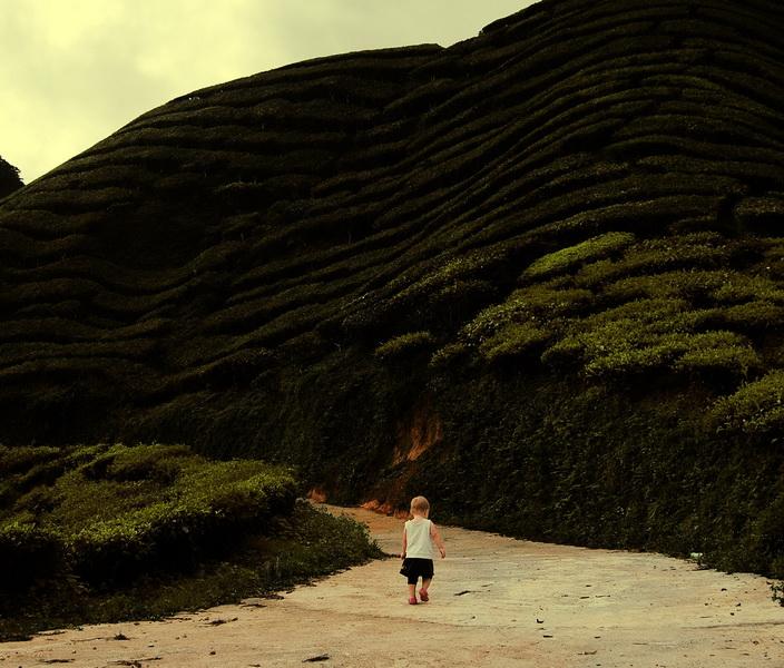 Aya walking the tea fields malaysia