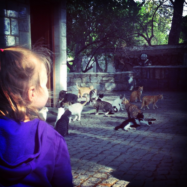 Aya befriending the kitties at Ephesus