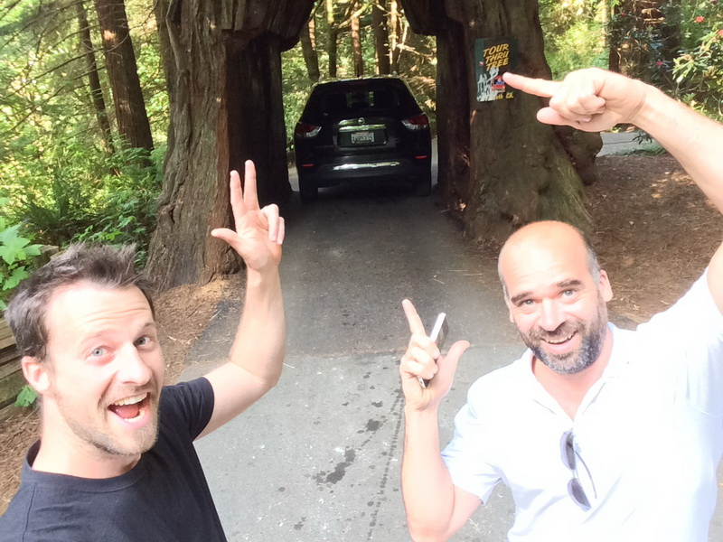 Driving through the redwoods literally