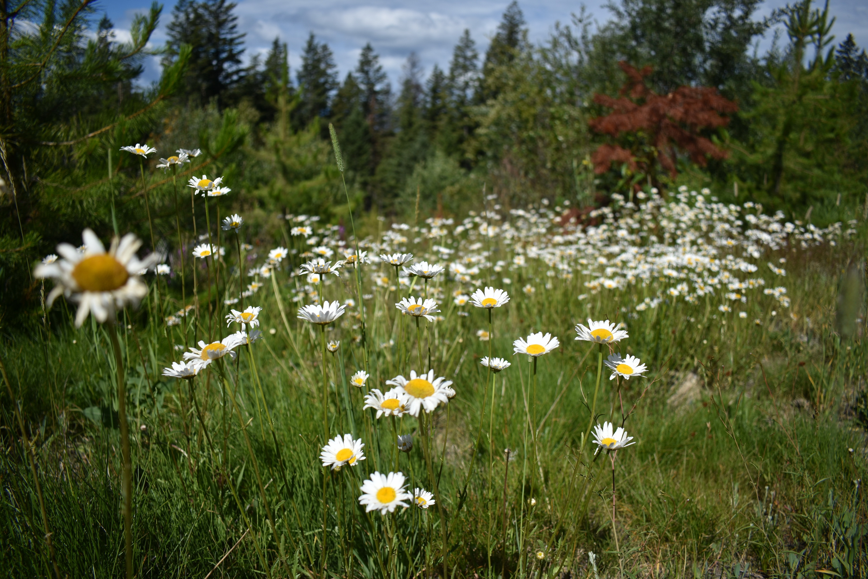 wrinkly face white wildflowers